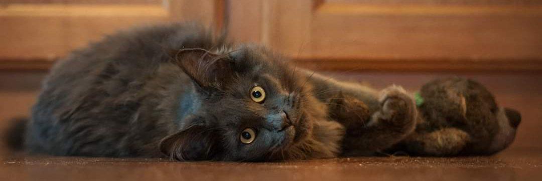 Katzenberatung mit Herz