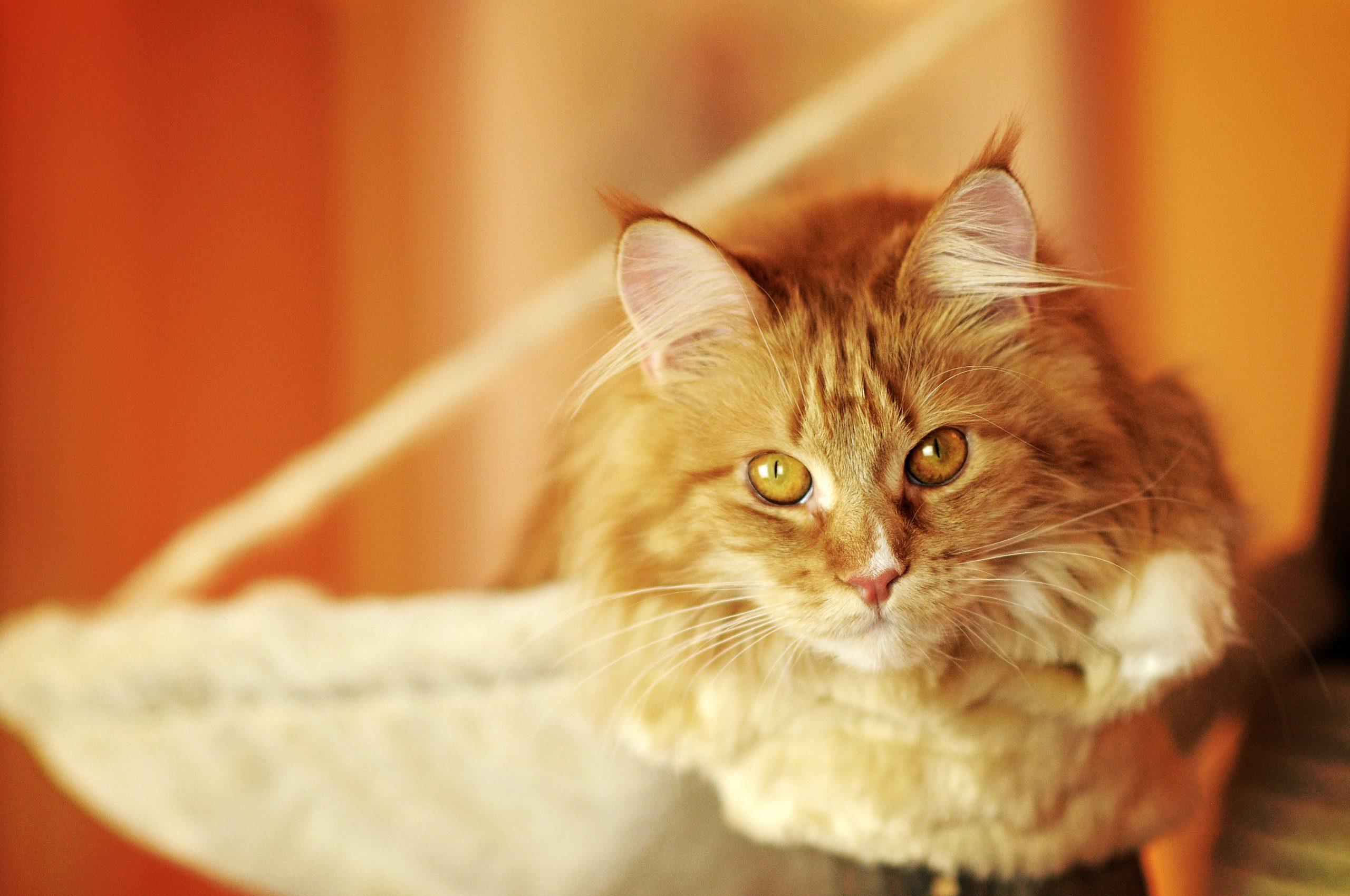 Hallo Katzenwelt oder was schreibe ich nur im ersten Katzenblogbeitrag?