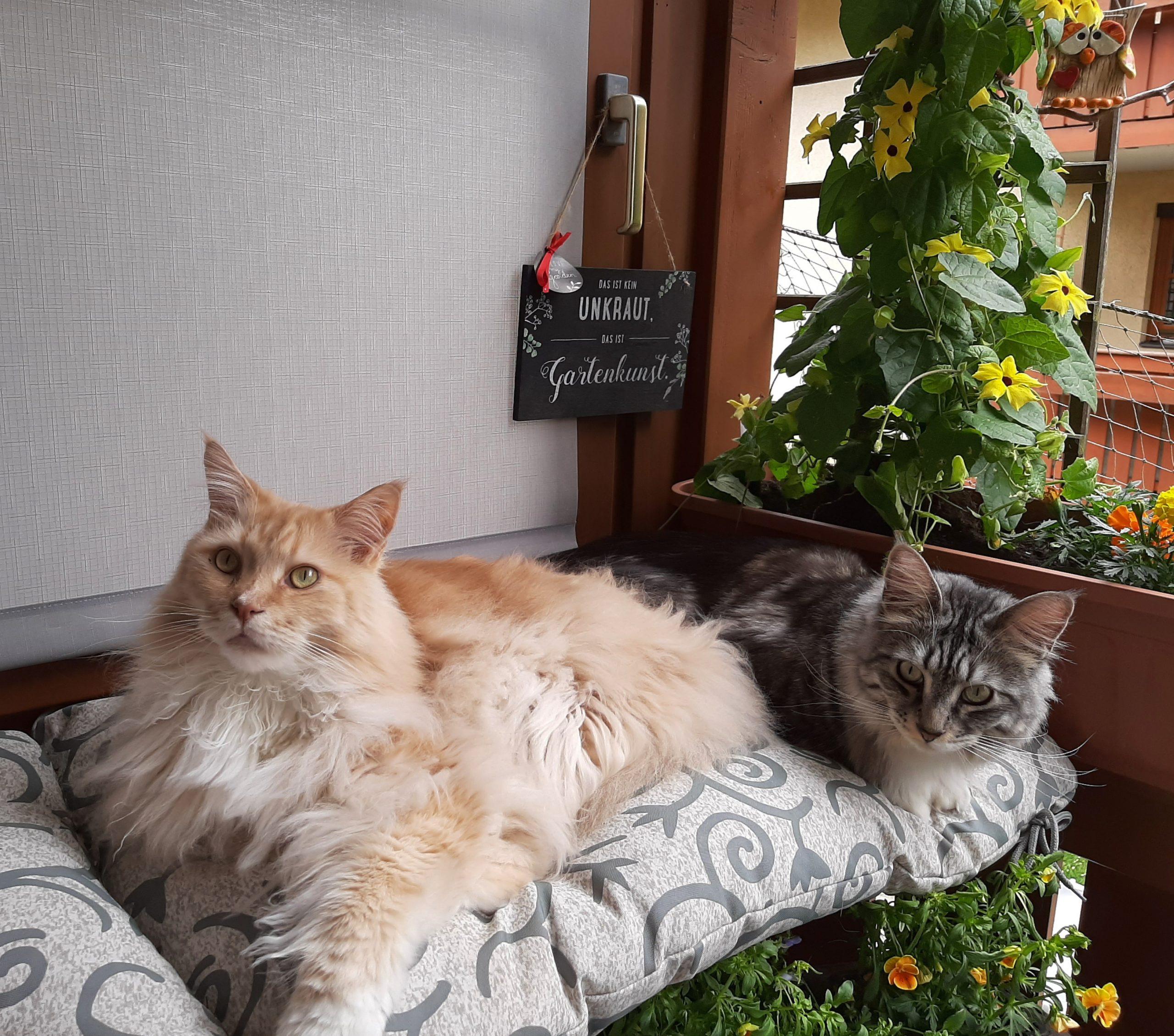 Ein Katzenleben lang—Ein Versprechen für gute und für schlechte Zeiten